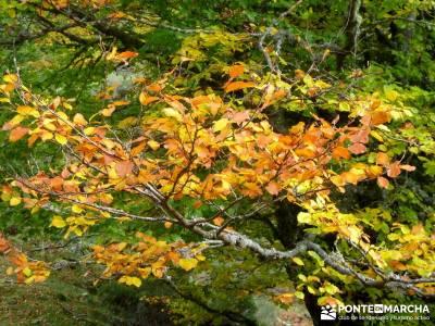Hayedos Parque Natural de Redes;excursiones desde madrid cerezos en flor valle del jerte nacimiento